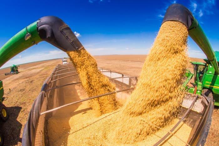 Produtores de grãos devem ter boa rentabilidade em 2022