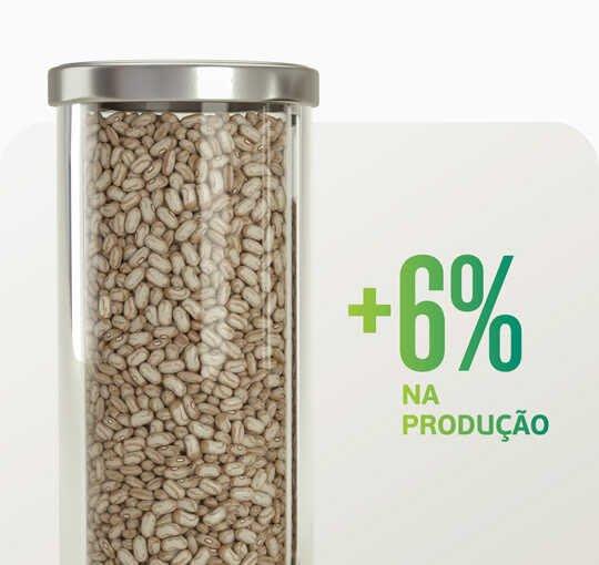Sturdy no feijão: alta produtividade sem altos custos. Ganhe mais com Satis.
